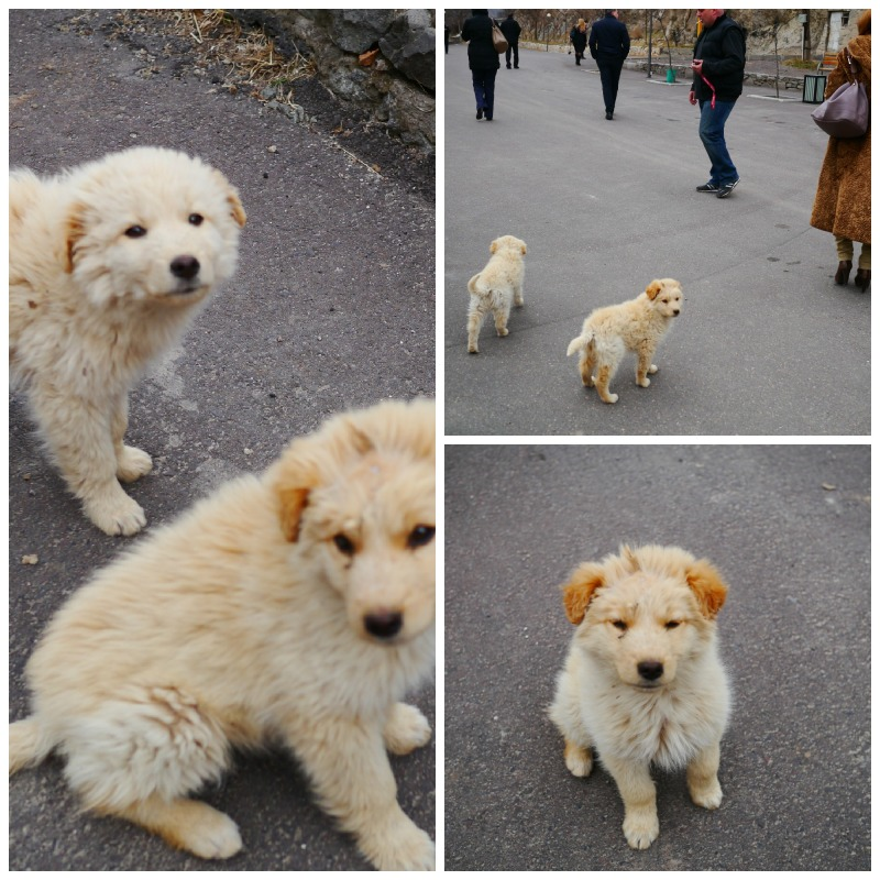 Puppy Spirit Guides