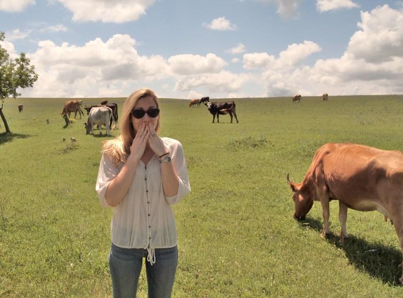 Cows.  Teehee.